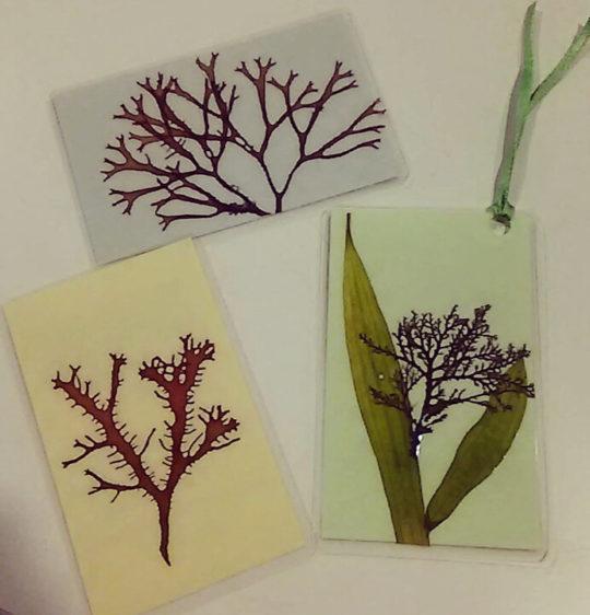 海藻押し葉クラフト