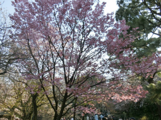都内屈指の桜の名所