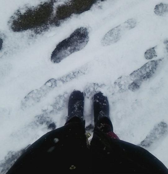 都心でも積雪