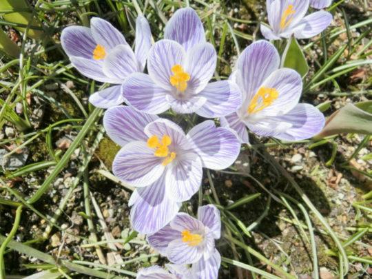 早春をつげる花