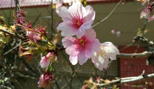 春爛漫な週末
