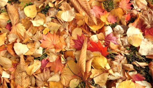 秋深まり冬支度