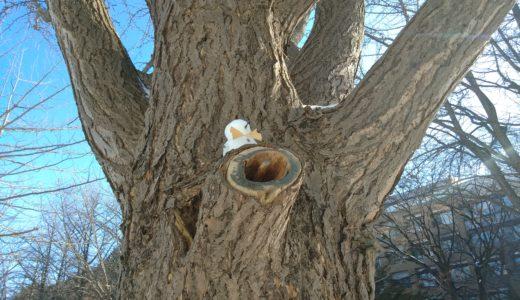 木の上で日向ぼっこ