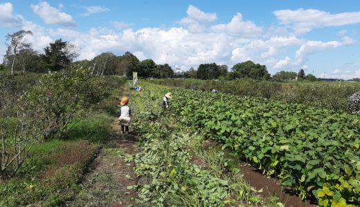 北広島で収穫体験