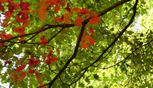 秋の楽しみもそれぞれ